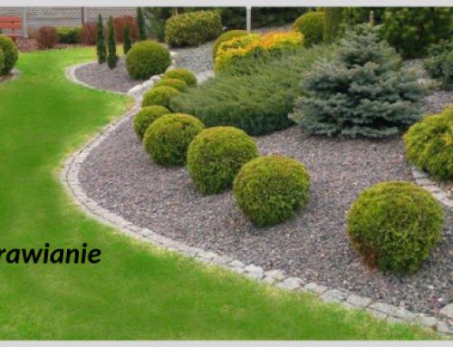 Biznes jest jak uprawianie ogrodu